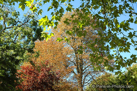 paris autumn colours, jardin du ranelagh, autumn, trees