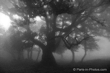 Madeira mist, trees