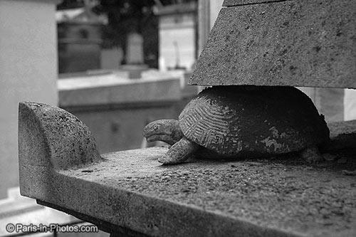 pere lachaise, tortoise